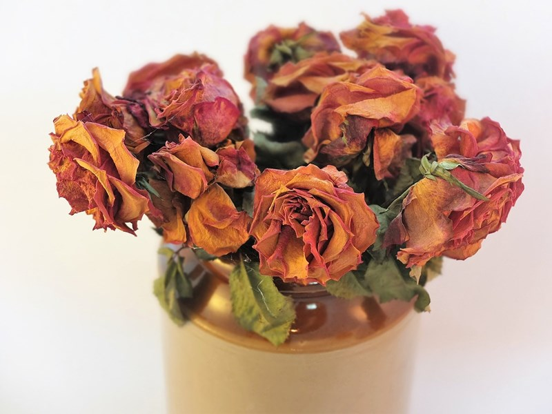 How To Preserve Flowers Blogs Flowerama Cedar Falls